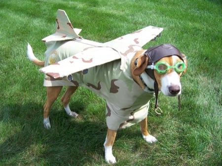 airplanedog.jpg